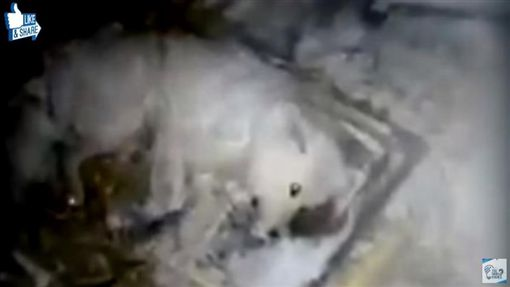 俄羅斯,狗,虐狗,狗被凍死(圖/翻攝影YouTube)