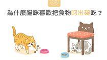 名家/毛起來/為什麼貓咪喜歡把食物叼出碗吃?