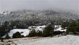 澳洲,塔斯馬尼亞,Tasmania,夏天,下雪,暴風雪(推特)