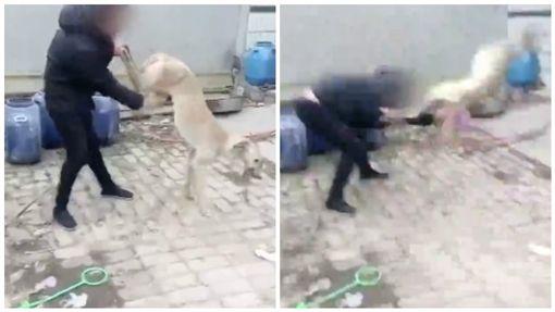 中國大陸,河北,虐狗,活活把狗摔死。(圖/翻攝自《梨視頻》)