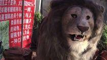 騙很大!海南島驚見仿真動物園 獅子老虎攏是機械玩具(圖/大陸網站)
