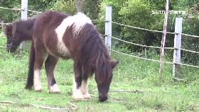 拍賣20小馬1800