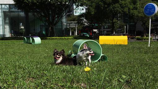 跑吧!毛小孩,寵物野餐日。(業配圖/廠商提供)