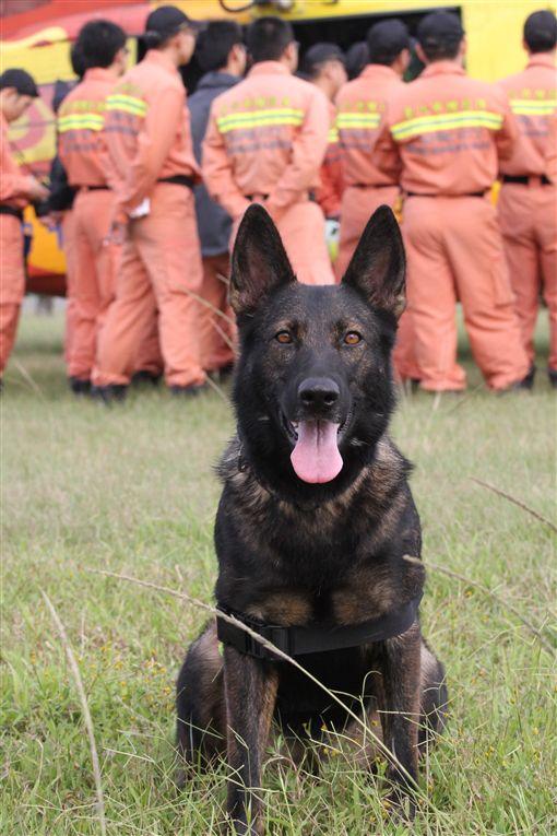 台北,消防,搜救犬,RUBY,寄養