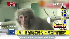 日猴逃走中g1600