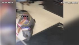 直擊獼猴偷大亨堡!網友全歪樓:原PO聲音萌萌噠