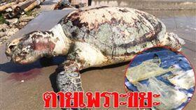 國際,汙染,泰國,沙灘,海洋,環境,垃圾,綠蠵龜 圖/翻攝自泰國網
