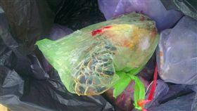 保育類野生動物綠蠵龜,遭吉貝消防分隊肢解食用。圖取自PTT八卦版
