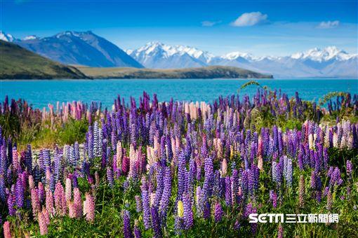 紐西蘭。(圖/Tripresso旅遊咖提供)