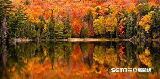 加拿大,楓葉。(圖/Tripresso旅遊咖提供)