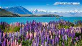 紐西蘭。(圖/Tripresso旅遊咖提供)'