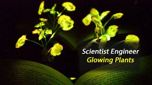 美國,環保,發明,發光植物,MIT,植物奈米電子學 圖/翻攝自YouTube