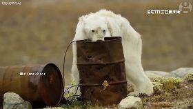 極熊翻垃圾1200
