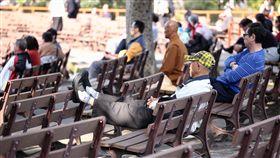 陽光露臉 民眾享受日光浴(1)大台北地區10日陽光久違地露臉,氣溫溫和舒適,許多民眾趁著晴朗好天氣,在台北二二八和平紀念公園內悠閒地曬太陽。中央社記者吳翊寧攝 106年12月10日