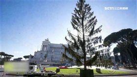 耶誕樹提前陣亡 羅馬人酸:像馬桶刷