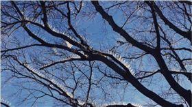 樹枝,超跑,停車,英國,釘子,小鳥,Bristol,Jennifer Garrett 圖/翻攝自推特