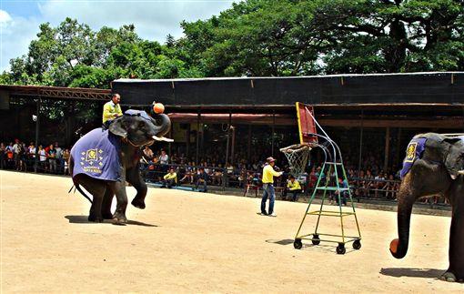 泰國大象表演(圖/pixabay)