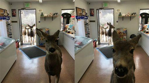 母鹿,小鹿(圖/翻攝自thedodo.com)