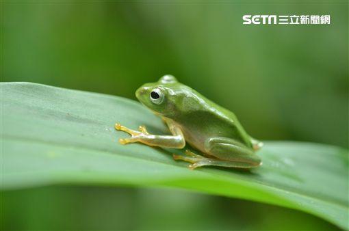 台北市,公園處,公園,輕旅行,生態公園,共融性遊戲場,樹蛙,螢火蟲