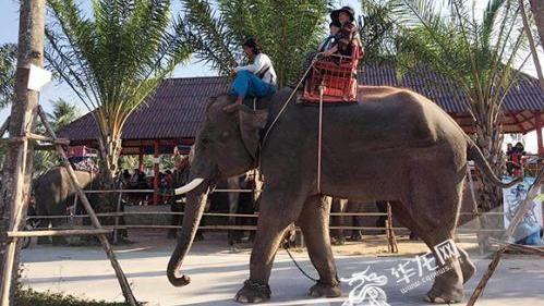 陸領隊在泰國遭大象踩死 承載陸客曝真相(圖/微博)