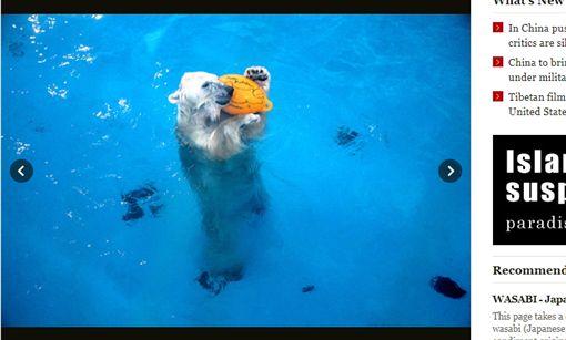 熊本震後沒人來 北極熊Maruru重覆做這件事(圖/翻攝自朝日新聞)