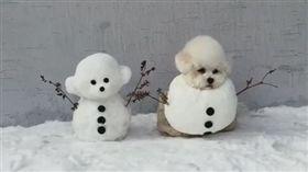 狗,雪,瑪爾濟斯,雪人,冰雪奇緣,棉花糖,冬天(圖/翻攝自hazelnut_dog IG)