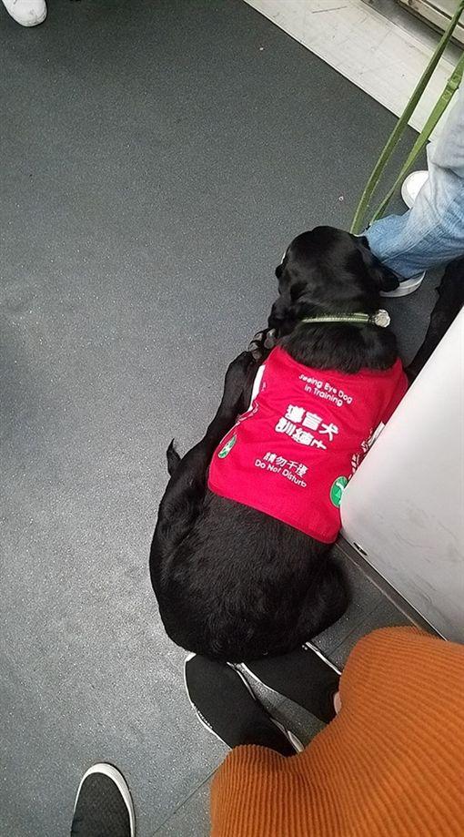 導盲犬一屁股坐她腳上 女乘客不敢動:牠們很辛苦圖/翻攝自臉書社團「巴打絲打facebook Club」