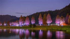 墓園落羽松配燈光 遊客夜衝熱門點(圖/攝影師石世民提供)