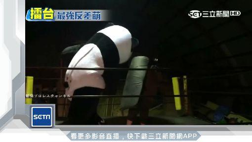 又萌又狠! 3公尺「貓熊摔角手」驚現北海道