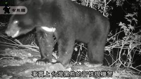 台灣黑熊,蜂蜜/翻攝東部臺灣黑熊教育館臉書