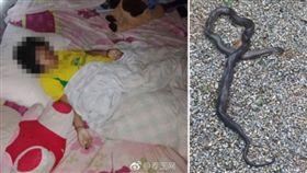 泰國素叻他尼府有一名70歲阿嬤叫孫女起床時,發現孫女巴帕薇身體都僵硬已經死亡,警方接獲報案到場後,發現一條超過2公尺長的眼鏡蛇在床邊,初估研判巴帕薇被眼鏡蛇咬死。(圖/翻攝自微博)