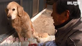 狗狗捐贈眼角膜,遺愛人間。(圖/翻攝自節目片段)