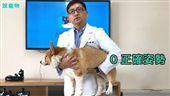名家/PetTalk:說寵物/抱柯基的方式(勿用)