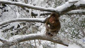寒冷,下雪,猴子,冰凍 示意圖/翻攝自Pixabay