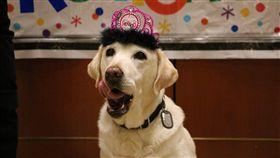 退休,奧蘭多國際機場,Gema,警犬,拉不拉多,狗,毛孩 (圖/翻攝自Orlando International Airport臉書)