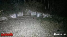 泰國,羅勇府,墳墓,樹林(微博)