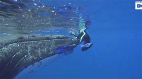 鯨魚,座頭鯨,虎鯊,Nan Hauser,保護,魚鰭,鯊魚,動物 (圖/翻攝自YouTube)