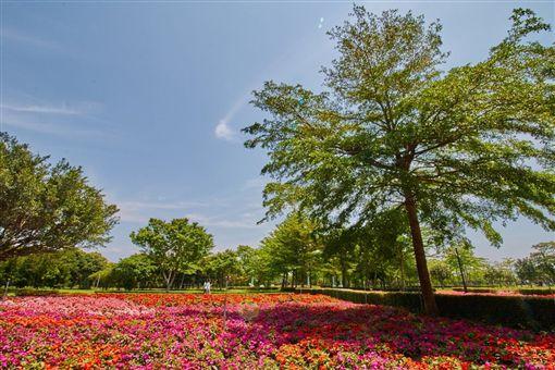 花蓮花海,賞花,知卡宣森林公園。(圖/翻攝自花東縱谷風景區官網)