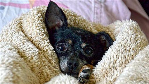 狗、寒冷、冷氣團、寒流、溫暖/pixabay