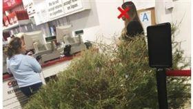 美式賣場(Costco)「不滿意即可退貨」的服務深受民眾喜愛,但也衍生出不少奧客。有一名婦人在聖誕節過了10日後,搬著聖誕樹到好市多退貨,理由則說「它死掉了」,讓網友看到後紛紛痛批「太可恥」。(圖/翻攝自《boredpanda》)