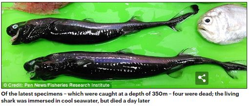台東外海捕獲「外星怪魚」紅到海外,外國網友議論紛紛。(圖/翻攝Daily Mail)