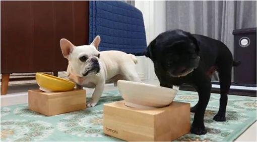 狗,毛孩,法鬥,巴哥,搶食物 圖/翻攝自ig