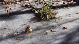 鱷魚,美國,北卡羅萊納,寒流,呼吸 圖/翻攝自臉書