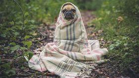 冷,寒流,狗 ▲示意圖/翻攝自Pixabay