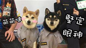台北,婦幼隊,柴犬
