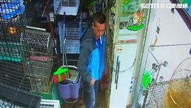 羅男竊價值16000元的灰鸚鵡幼鳥遭逮,還辯稱是雙胞胎弟弟偷的,警方訊後將他依竊盜罪送辦(翻攝畫面)