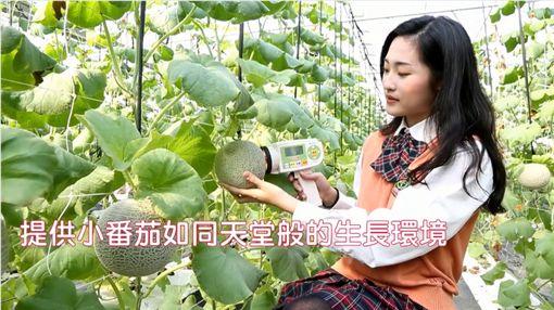 嘉縣無厘頭!玉女賣番茄 捧的卻是洋香瓜臉書粉絲團「87趴」