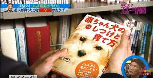 教練用寵物書籍指導糸井(圖/翻攝自YouTube)