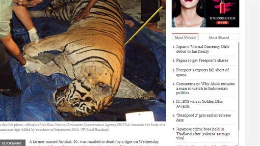 印尼,老虎,恐怖,員工,目睹,膝蓋,咬爛,棕櫚油,同事http://www.thejakartapost.com/news/2018/01/04/oil-palm-farmer-mauled-to-death-by-tiger-in-riau.html
