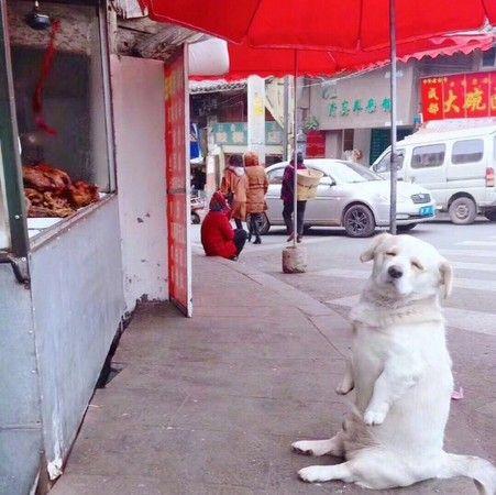 寵物,新奇,毛小孩,汪星人,狗 圖/翻攝自微博